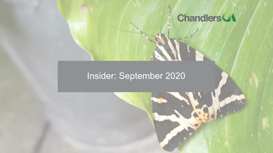 Chandlers CA - Insider: September 2020